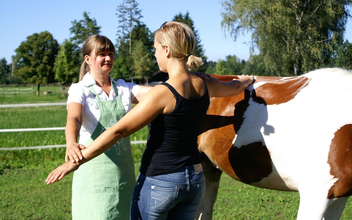 Kinesiologie am Pferd