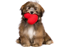 Hund mit Herz 123rf