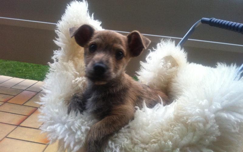 Fuetterung Junghund Hund Prinz