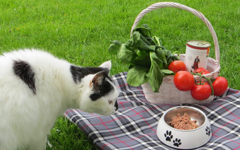 Fuetterung kommerzielles Alleinfutter Katze Cosma