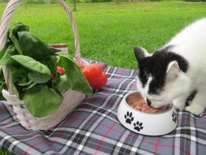 Katze Cosma beim Picknick mit Bio Futter Defu
