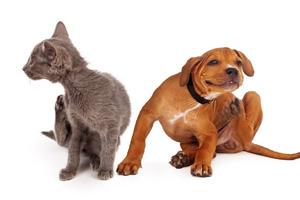 Juckreiz von Katze und Hund 123rf