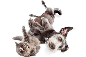 Katze und Hund am Rücken liegend 123rf