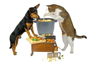 Kochen Hund und Katze 123rf