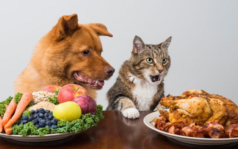 Ernährungsberatung für Hund und Katze cc 123rf