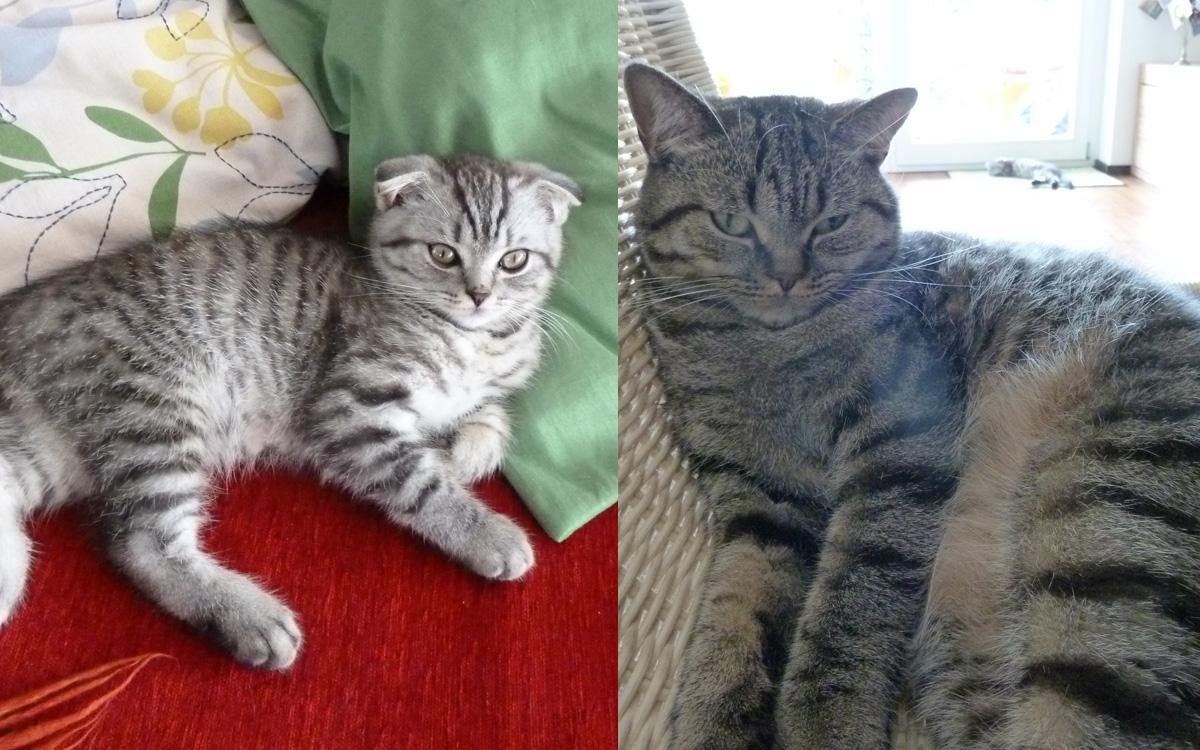 Katzen Benito und Zoe
