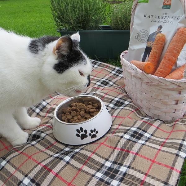 Katzen Trockenfutter