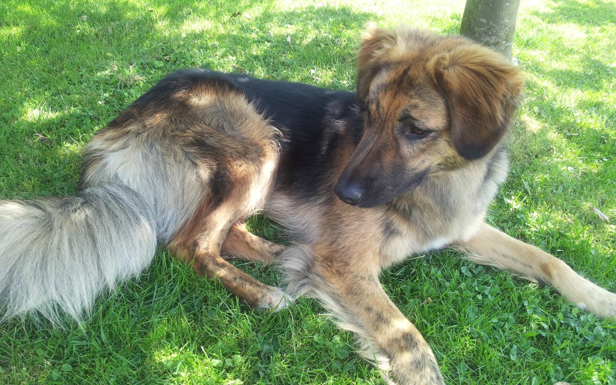 Hund Nero