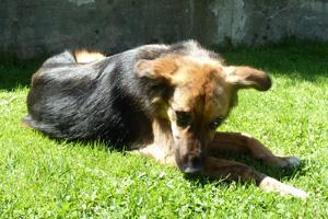 Hund Nero frueher