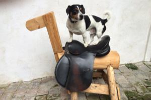 Hund Benny beim Reiten
