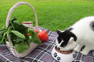 Katze Cosma frisst das Bio Katzenfutter von Defu