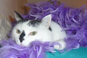 Katze Cosma erlegte die Federboa