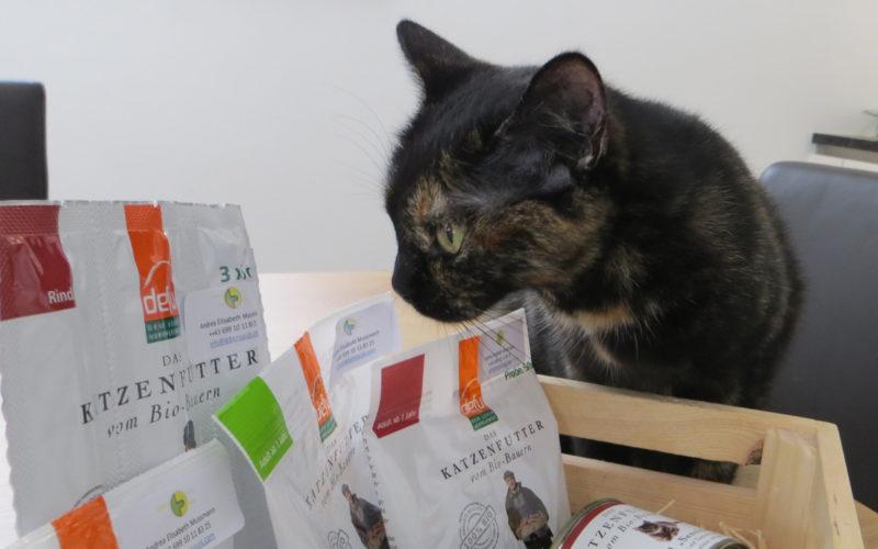 Katze Nala beschnuppert das Defu Bio Futter