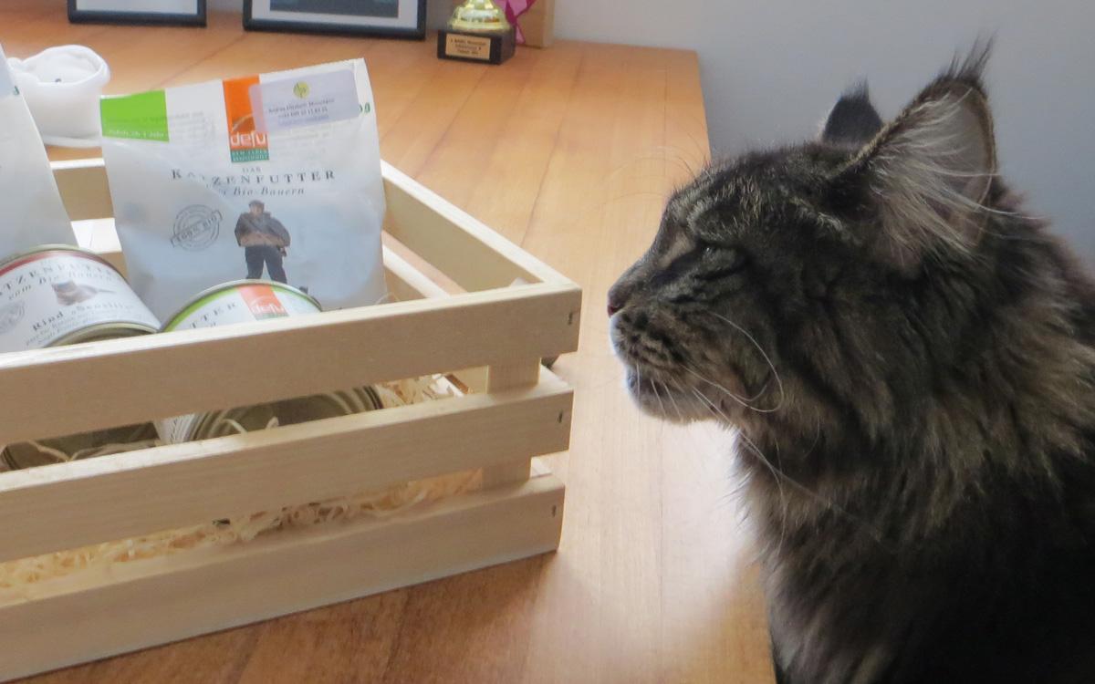 Katze Shania begutachtet das Defu Bio Katzenfutter