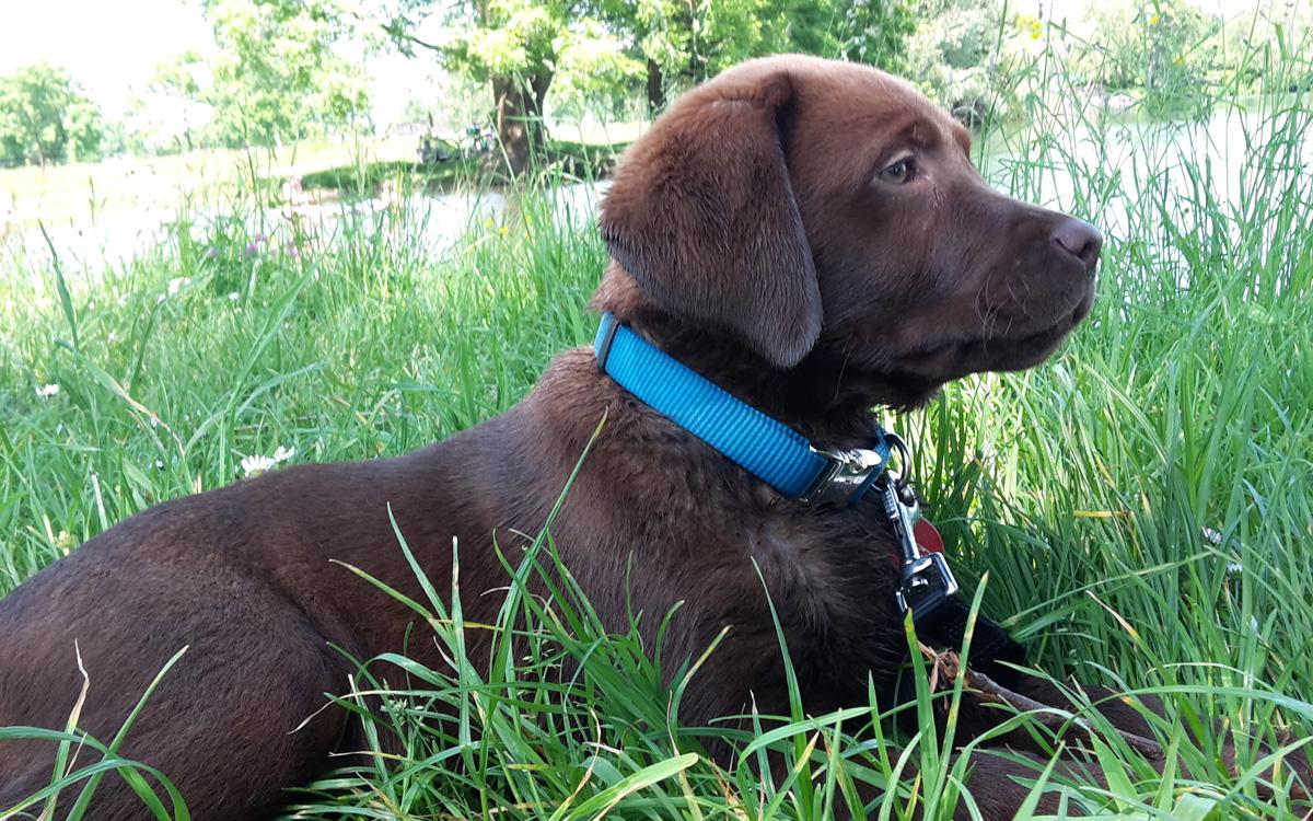 Hund Nelly mit sieben Monaten