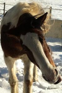 Pferd Jackomo Praxis Lebenspuls Protrait