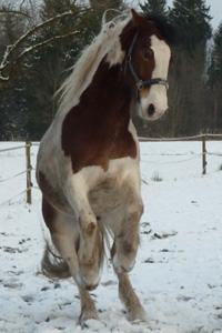 Pferd Jackomo Praxis Lebenspuls beim Sprung