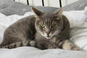 Katze Adriano im Bett