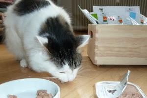 Katze Mietzkatz beim Fressen vom Defu Bio Futter