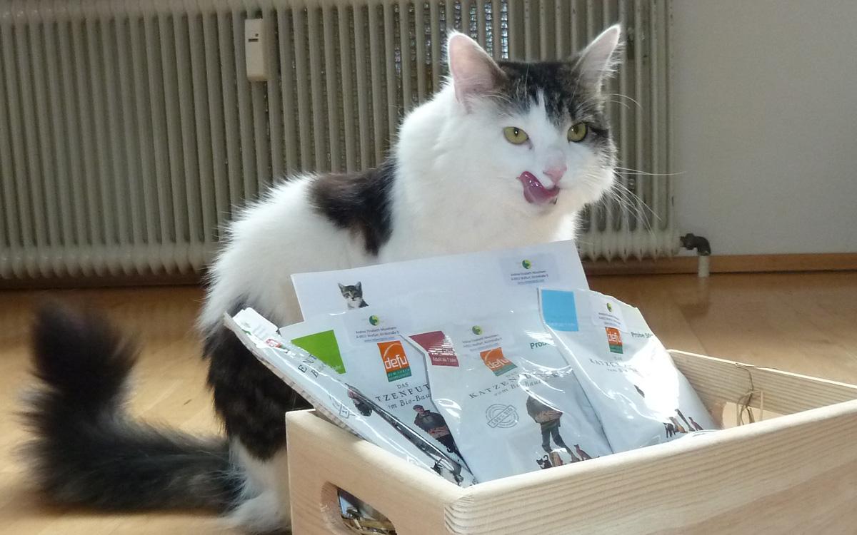 Katze Mietzkatz mit Defu Bio Futter