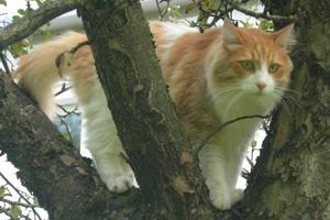 Katze Tigger im Baum