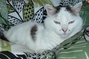 Katze Shiva von Praxis Lebenspuls im Bett
