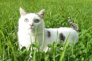 Katze Shiva von Praxis Lebenspuls im Gras