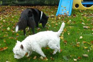 Hunde Miga und Ace werden gebarft mit Futtermedicus Vitaminen