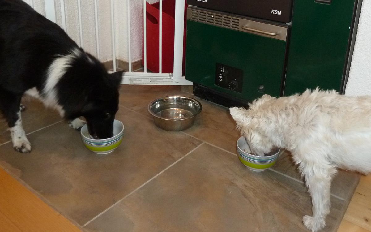 Hunde Miga und Ace beim Fressen der Barf Ration mit Futtermedicus Vitaminen