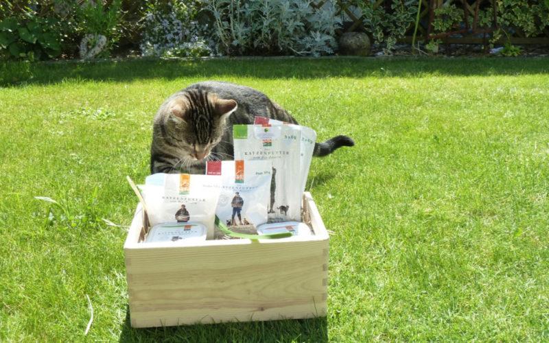 Katze Simba begutachtet das Defu Bio Katzenfutter