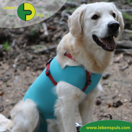 VetMedCare Tierbedarf Body Hund