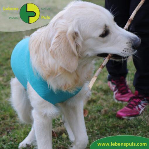 VetMedCare Tierbedarf Body 2 Hund