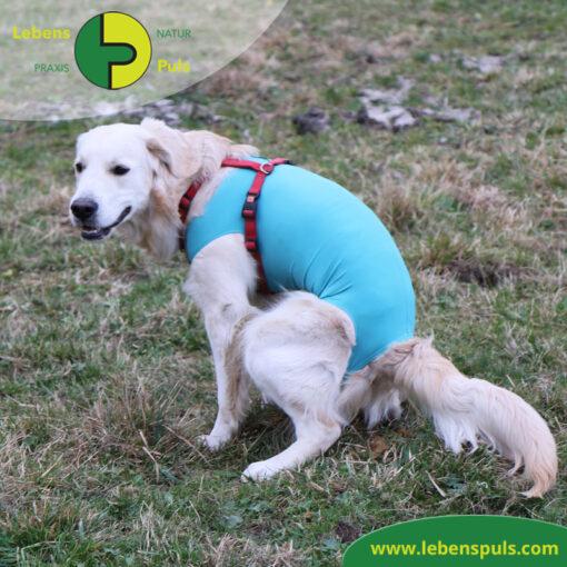 VetMedCare Tierbedarf Body 3 Hund