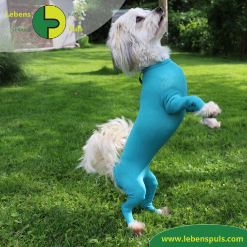VetMedCare Tierbedarf Body mit 4 Beinen Hund Huendin 2