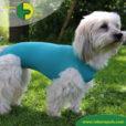 VetMedCare Tierbedarf Body Hund weiblich