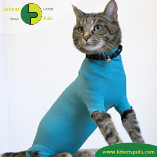 VetMedCare Tierbedarf Cat Body