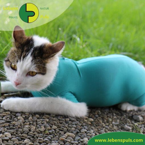 VetMedCare Tierbedarf Cat Body 1