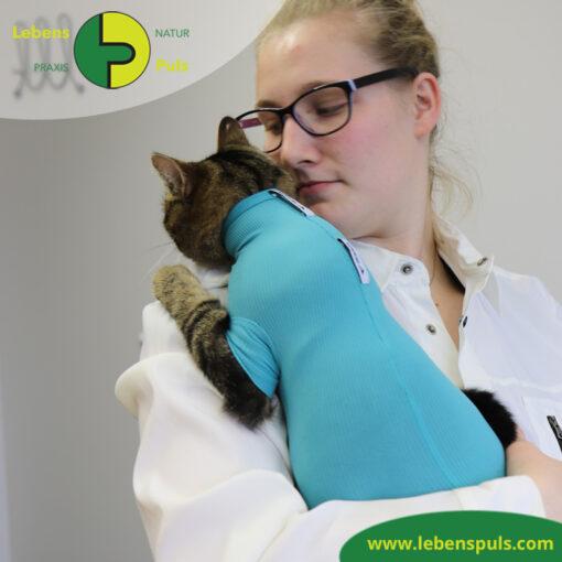 VetMedCare Tierbedarf Cat Body 3