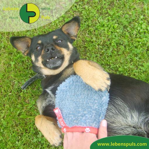 VetMedCare Tierbedarf Fellpflege Handschuh 1