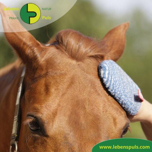 VetMedCare Tierbedarf Fellpflege Handschuh 4