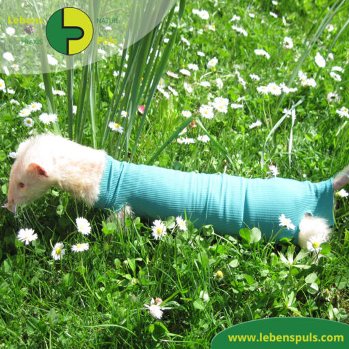 VetMedCare Tierbedarf Safety Tube
