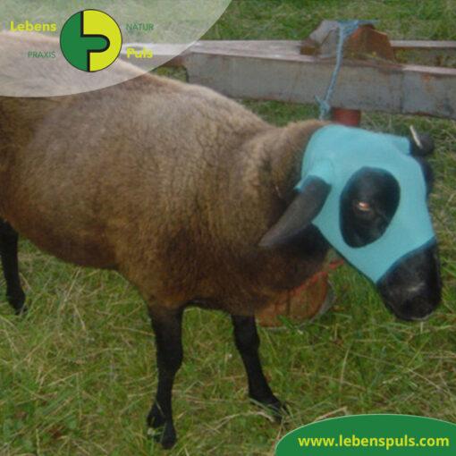 VetMedCare Tierbedarf Safety Tube Kopfschutz