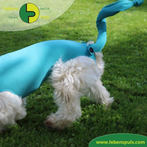 VetMedCare Tierbedarf Safety Tube Rutenschutz
