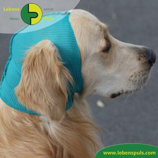 VetMedCare Tierbedarf Safety Tube Kopfschutz 1