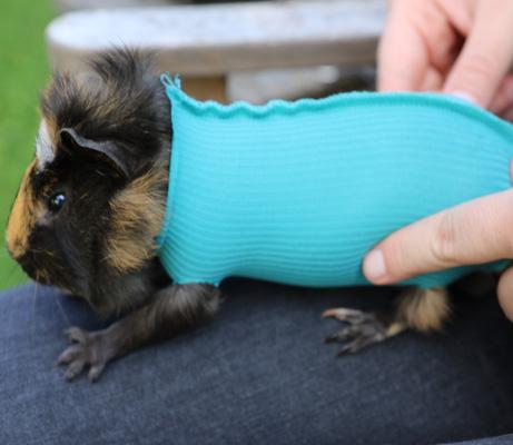 VetMedCare Tierbedarf Safety Tube Meerschweinchen