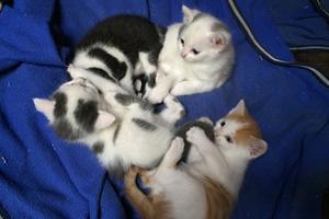 Katzen Babys vom Reitsportzentrum Flurhof 1