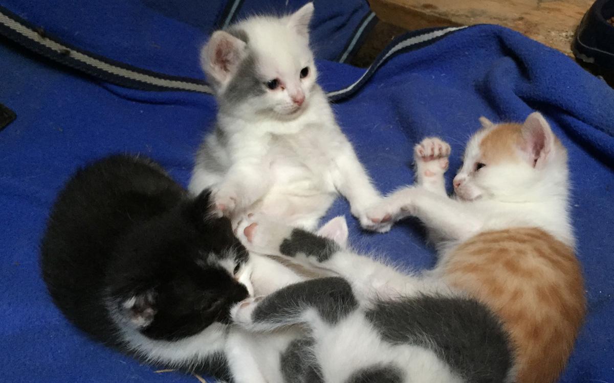 Katzen Babys vom Reitsportzentrum Flurhof