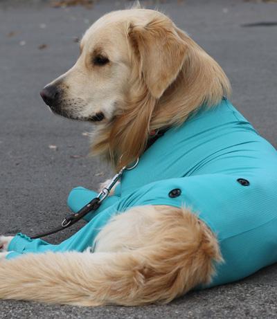 VetMedCare Tierbedarf Druckknöpfe groß für Wundpad