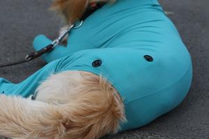 VetMedCare Tierbedarf Druckknöpfe groß für Wundpad 2