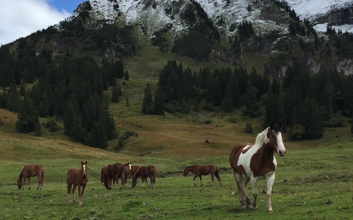Pferd Jackomo Alm Lebenspuls 1